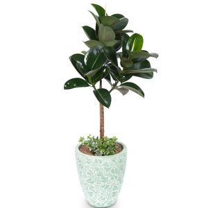 고무나무(사기화분)